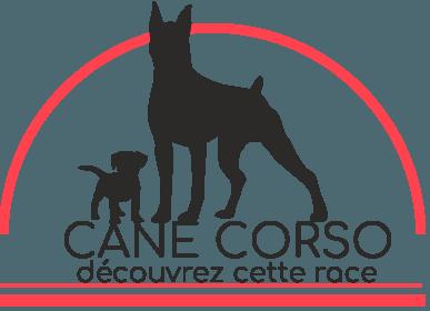 Cane Corso : découvrez cette race